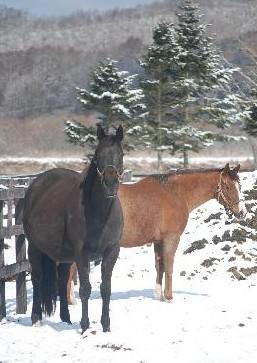 3・雪・繁殖牝馬