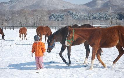 3・雪・1歳牝馬