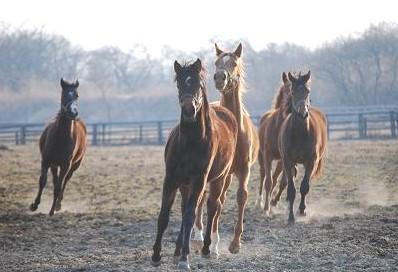 3・ディー・1歳牝馬