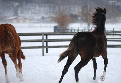 2・吹雪・風と共に