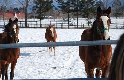 2・歯・迎えに来る牝馬
