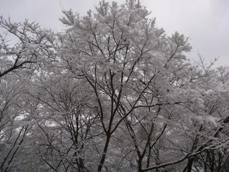 久しぶりの積雪4