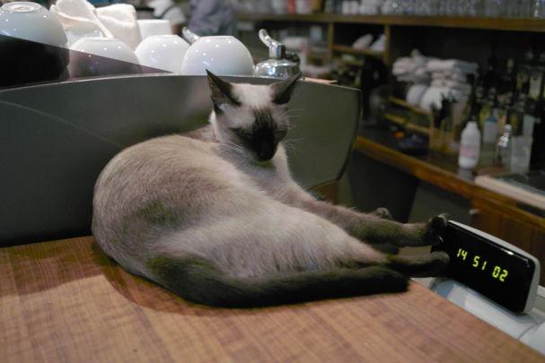Cats2~1012049