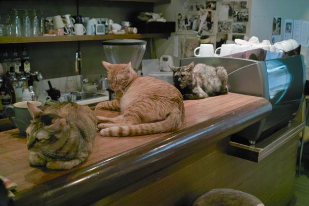 Cats2~1012042