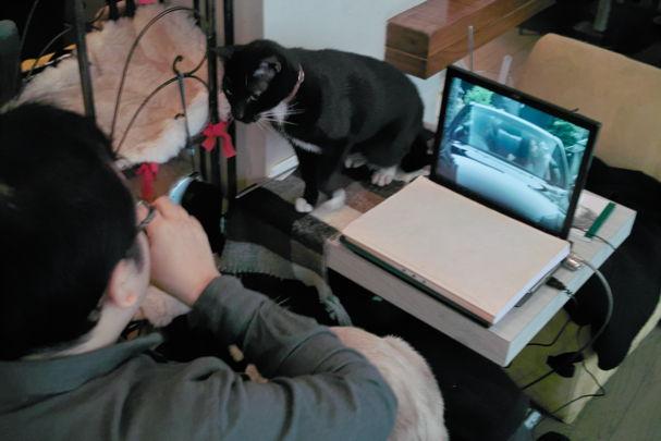 Cats2~10120424