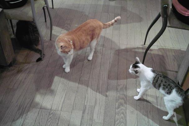 Cats2~10120433