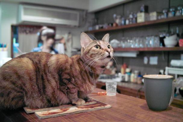 Cats2~10120436