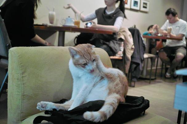Cats2~10120460