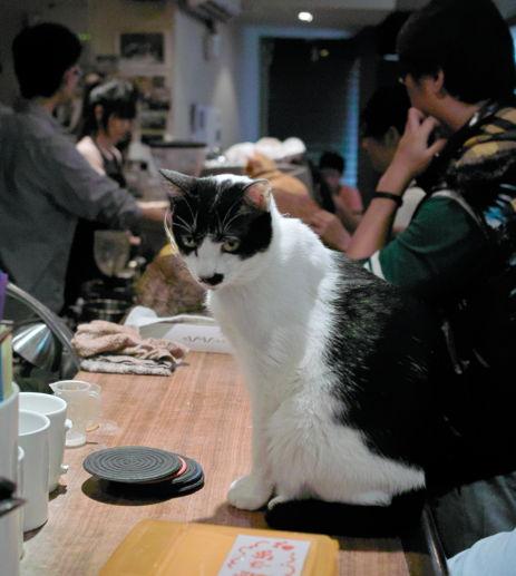 Cats2~10120470