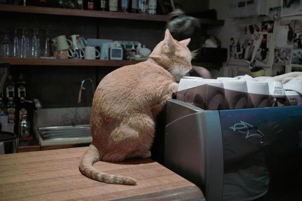 Cats2~10120479