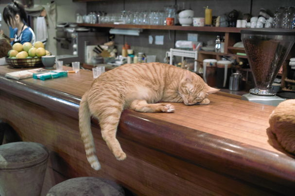 Cats2~10120494