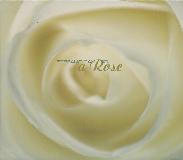 [Stefano_Panunzi]A_Rose