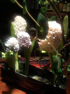 お花の稽古3