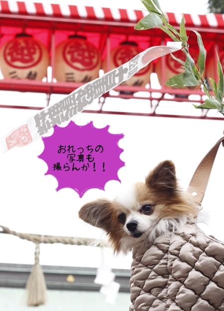 _MG_9627-2012-2012.jpg