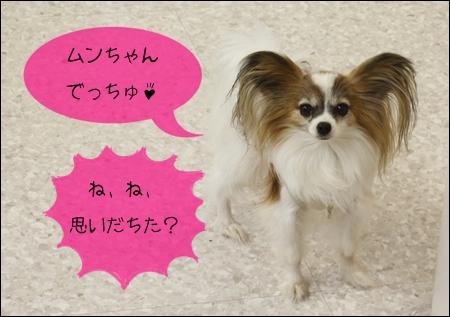 _MG_9691-2012.jpg