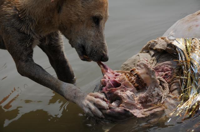 顔を食べる犬