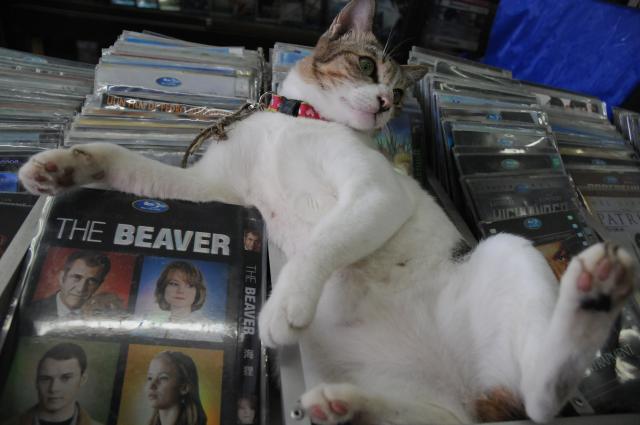 ネコのワン