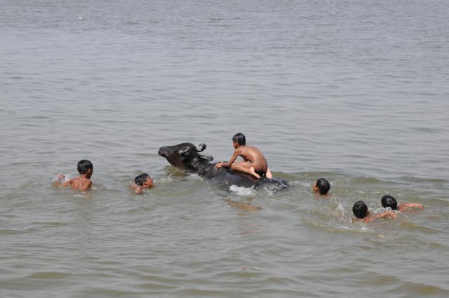 水牛と遊ぶ子供たち