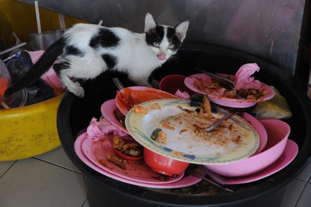 マレーシアの猫はよくしゃべる