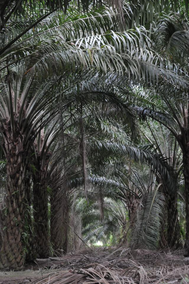 椰子の宮殿