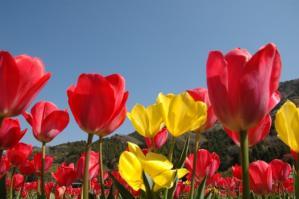 11春の花06
