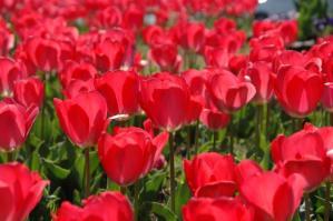 11春の花05