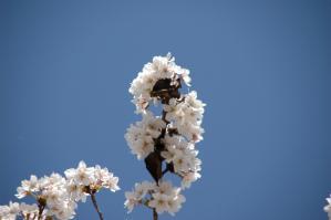 11春の花02