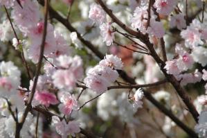 11春の花11
