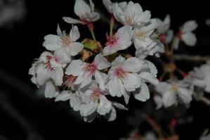 11春の花12