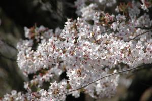 11春の花10