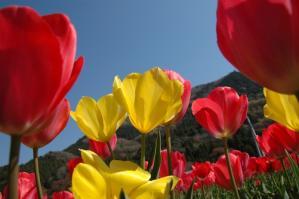 11春の花07