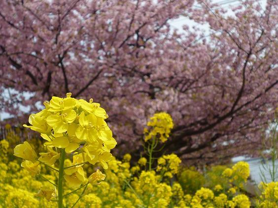 2012_0316戸田別館 0019