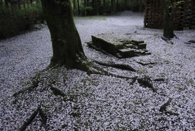 花吹雪の庭
