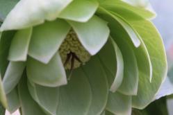 greendouble.jpg