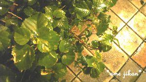CA8DOHUA201026a.jpg