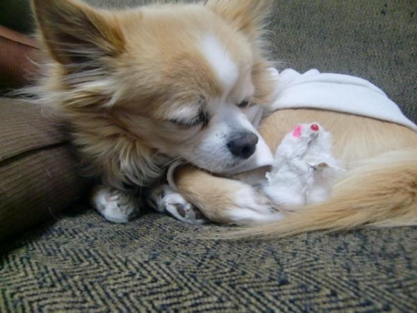 ねずみと寝てるラテ