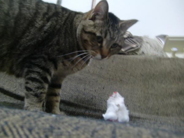 ネズミ発見!
