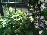 花のリレー4