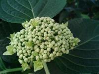花のリレー5