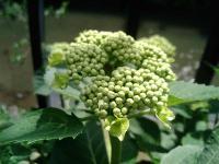 花のリレー6