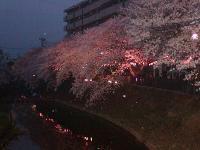 桜橋から0403b