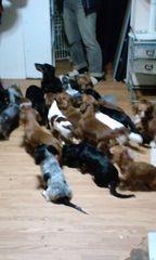 1402700473_247保護犬