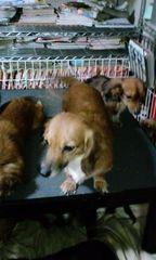 1402700473_2保護犬