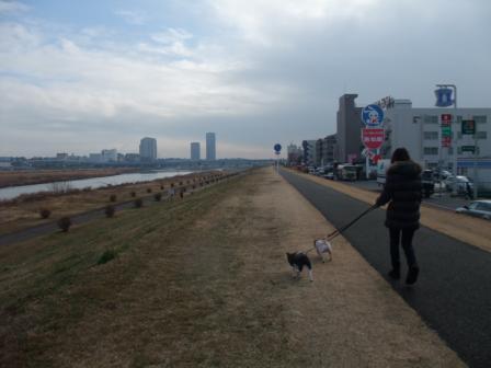 2.9多摩川河川敷