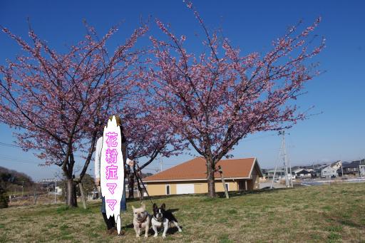 3-18桜の木①