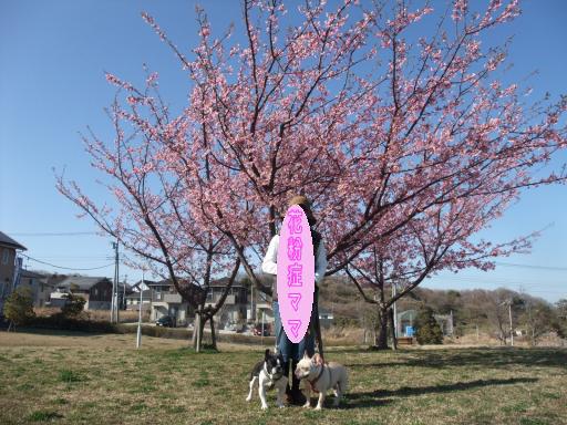3-18桜ママ