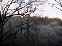 樹 シラカンバ 霧氷か 101107_cIMG_5152