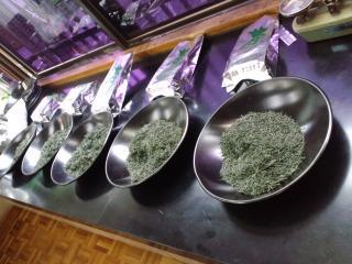本山茶サンプル