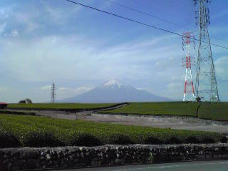 富士山とお茶