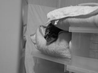 20091108 ベッドから顔1_R